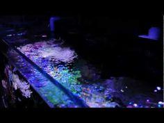 http://www.acuaristica.com/blog/2012/03/un-acuario-iluminado-por-leds-de-maxspect-calidad-desde-china/