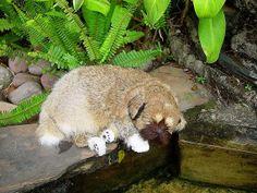 Sleeping Dog in Brown colors, fur animal