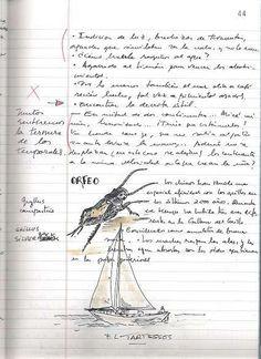 Magazine Defending the Kingdom Rafael R. Costa: The gentle metaphor of snail