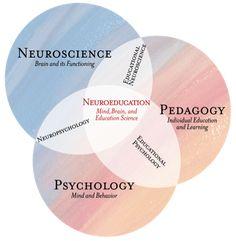 Las neuronas que disparan juntas, se conectan. Consejos sobre aplicación de la neuroeducación al aula | Filölearning