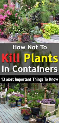 Do you kill your plants often? Well here're 13 things you must avoid to make your container plants keep growing. #Vegetablegardenbasics #vegetablegardening