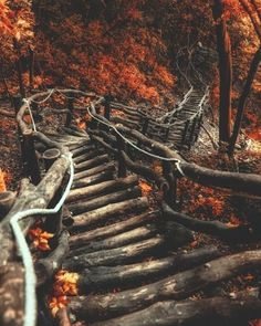Find images and videos about nature, autumn and fall on We Heart It - the app to get lost in what you love. Autumn Cozy, Autumn Forest, Autumn Fall, Autumn Leaves, Winter, Forest Path, Autumn Photography, Autumn Aesthetic Photography, Beauty Photography