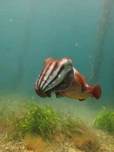 cuttlefish- which I know is real. But still. Look at that thing! Gah!