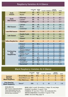 blueberry spacing plants 5' & rows 10-12' | Garden fruit ...