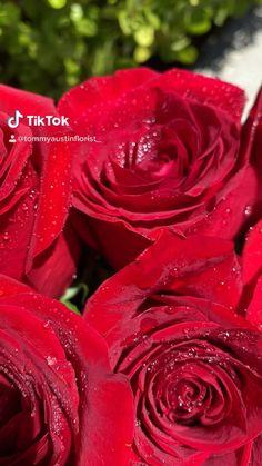 Beautiful Rose Flowers, Pink Rose Flower, Pretty Roses, Basket Flower Arrangements, Flower Centerpieces, Flower Phone Wallpaper, Rose Wallpaper, Love Wallpaper Download, Beautiful Scenery Pictures