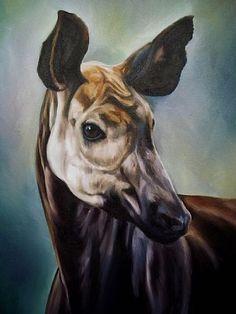 121 Best Okapia - Okapiland images in 2013 | Okapi, Animals, Giraffe
