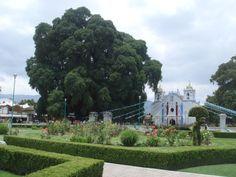 Tule Tree, Oaxaca, Mexico