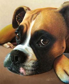 stunning photo to painting boxer dog portrait in oil - turn your photo to art!