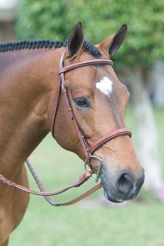 Intrepid International Web Horse Driving Lignes-Paire