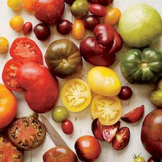 Spectacular Tomato Varieties