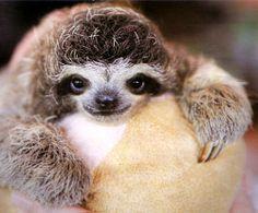 Sloth Lifestyle