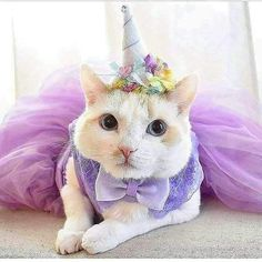 Cats Funny Party Kittens 34 Ideas For 2019 Animals And Pets, Baby Animals, Funny Animals, Cute Animals, Unicorn Memes, Unicorn Cat, Cute Cats, Funny Cats, Animal Dress Up