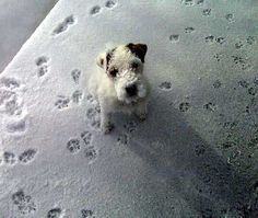 We didn't have much snow last winter, but what we did have, Tucker made sure he got a nose full of it,
