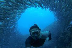 Cruisen bij de Galápagoseilanden