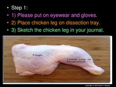 Chicken Leg Dissection PowerPoint, Muscular System, Skeletal System,