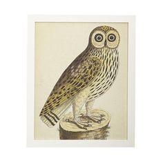 Albin Bird Engraving – Owl
