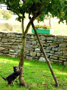 Casa Rural Apezetxea-mascotas-arruitz-larraun-navarra