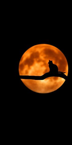 I Love Cats, Crazy Cats, Cool Cats, Planets Wallpaper, Cat Wallpaper, Beautiful Moon, Beautiful Cats, Halloween Wallpaper, Halloween Backgrounds