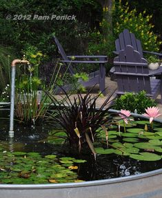 Stock trough garden pond idea  Digging | Gardening wisely & beautifully in a hot climate | Page 4