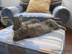 Bunnies spend a lazy Bunday relaxing on the ottoman - March 30, 2014