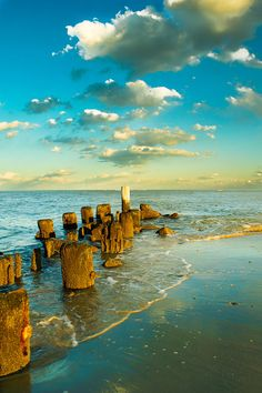 Pawleys Island, North Carolina, USA • photo: Matthew Trudea