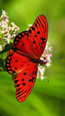 Butterflies And Moths 5