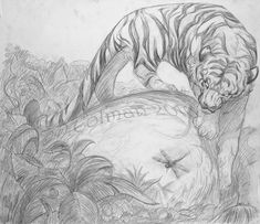 Marvelous Drawing Animals In The Zoo Ideas. Inconceivable Drawing Animals In The Zoo Ideas. Animal Sketches, Animal Drawings, Art Sketches, Cat Drawing, Sketch Drawing, All Nature, Mundo Animal, Illustrations, Animal Design