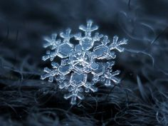 Macro photos of snowflakes show impossibly perfect designs is part of Snowflake photos - Snowflakes should be considered one of the great wonders of the world These photos by Alexey Kljatov demonstrate why Fotografia Macro, Snowflake Photography, Snowflake Photos, Real Snowflakes, Snowflake Wallpaper, Foto Transfer, Ice Crystals, Macro Shots, Snow And Ice