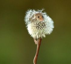 15 Animals That Fit Perfectly Into Things - InspireMore