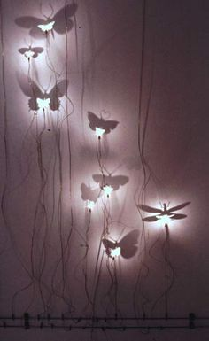 Insect Lights