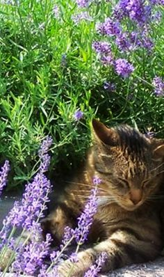 1000 images about plants safe for cats on pinterest for cats button fern and rubber plant. Black Bedroom Furniture Sets. Home Design Ideas