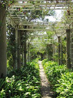 california shade garden | Shade in the garden, The Huntington, San Marino, California