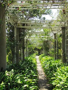 Shade in the garden, The Huntington, San Marino, California