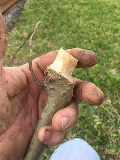 "How many times have you heard someone call a bonsai a ""Frankentree""? | Adam's Art and Bonsai Blog"