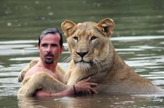 The Lion Whisperer, Kevin Richardson, swimming with Meg the Lioness.