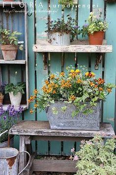 マリーゴールドの寄せ植え の画像|フローラのガーデニング・園芸作業日記