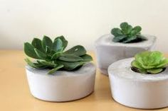 Succulents in small white containers