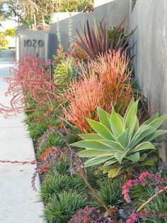 Succulent garden featuring agave and firestick by Roger's Gardens Landscape | Gardens