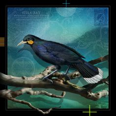 Tui Tane -med by Julian Hindson - prints Painting Techniques, Art Direction, Nativity, Birds, Graphic Design, Art Prints, Gallery, Artist, Artwork