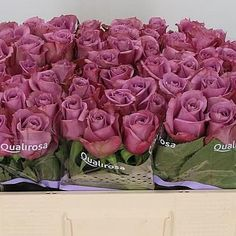 Rose New Orleans - 2018 Wedding Trend: Ultra Violet Purple. For lilac and purple wedding flowers to suit your colour scheme, visit our website at www.trianglenursery.co.uk/fresh-flowers!
