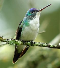Andean Emerald, Colombia