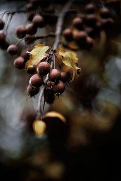 ❧ Autumn - L'automne ❦