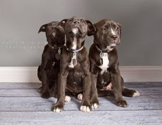 ADOPTED!! PUPPIES!!! Heather, Violet, Winnie (from left to right). These cuties are available at Cause for Paws Ohio. causeforpawsohio,com