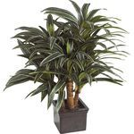 Artificial Massangeana Plant in Pot - good to use anywhere.