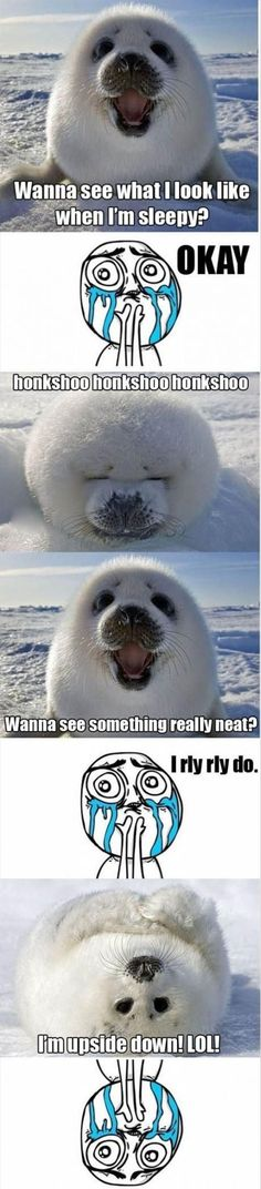 Baby Seal - Imgur