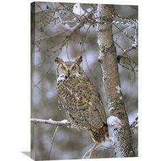 Global Gallery Great Horned Owl in Its Pale Form Perching in a Snow-Covered Tree British Columbia Canada Wall Art - GCS-397105-1218-142
