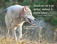 Soul Wolf Journey <3  photographer Lynn Bystrom