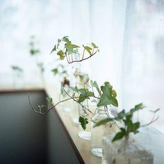 green plants*   Flickr - Photo Sharing!