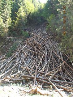 Moeciu - nu sunt lemne ci imensi copaci intristati de soarta lor :(