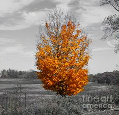 Autumn Tree Against Gray Sky Digital Art by Terry Weaver - Autumn Tree Against Gray Sky Fine Art Prints and Posters for Sale